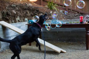 CHASING DOWN BUBBLES