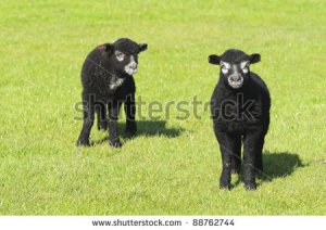 Ba Ba Black sheep