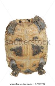 turtle inside