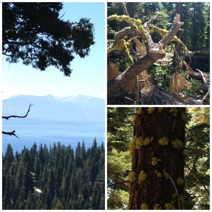 Tahoe Collage