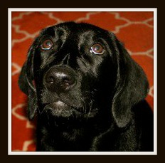 Lucy puppy 3.jpg
