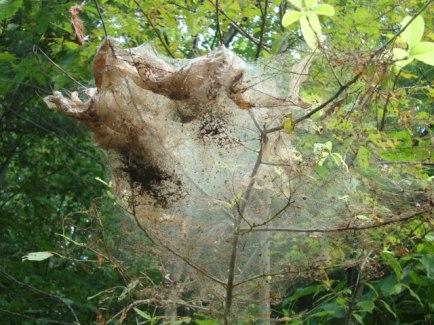 tree web2
