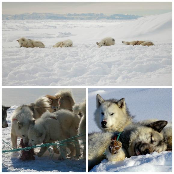 liveatsleep-dogs