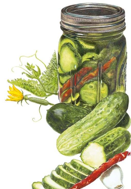 Cucumber-Homemade-Pickles