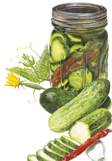 Cucumber-Homemade-Pickles